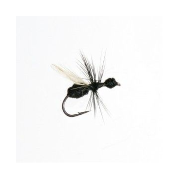 Mouche sèche fourmi